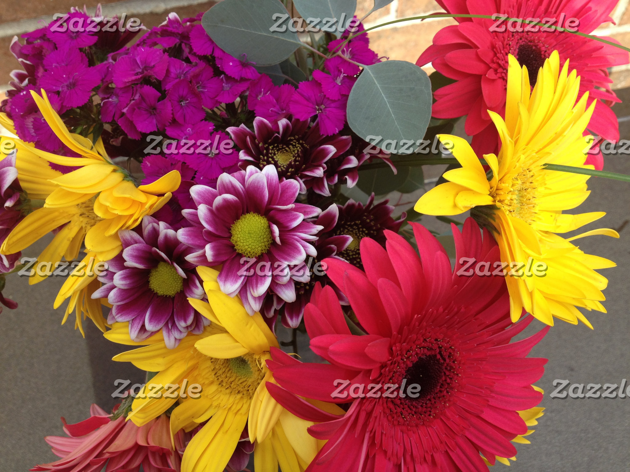 Awesome Daisies Flowers Beauty