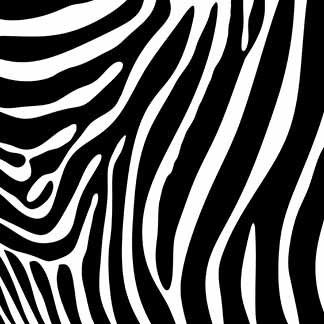Animal Prints - Zebra