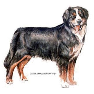 Bernese Mountain Dogs