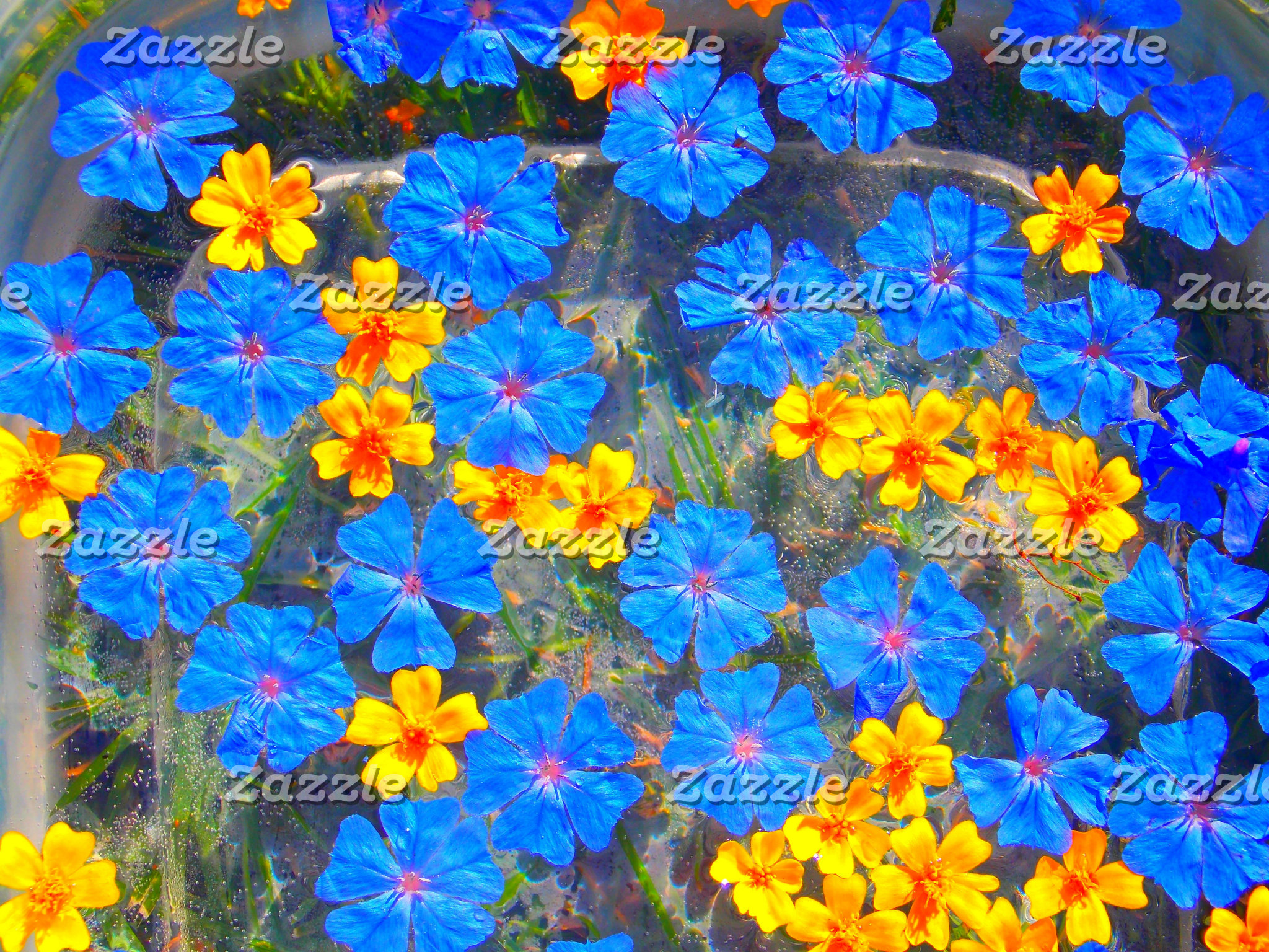 Little Blue and Yellow Flowers