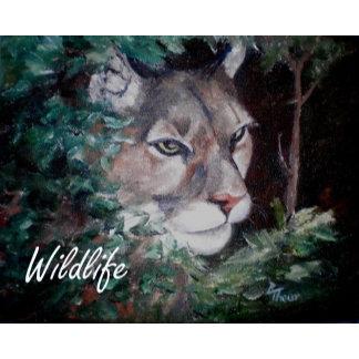 Animals - Wildlife
