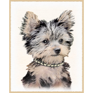 Yorkshire Terrier Puppy (New)