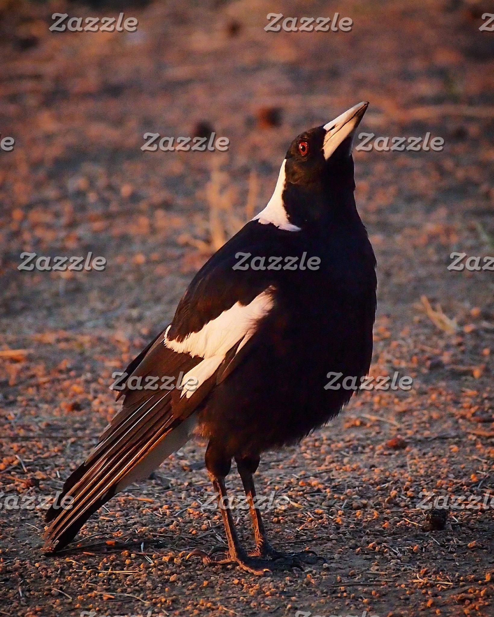 Animals / Birds / Bugs