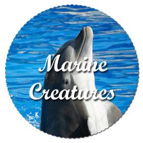 Marine Creatures