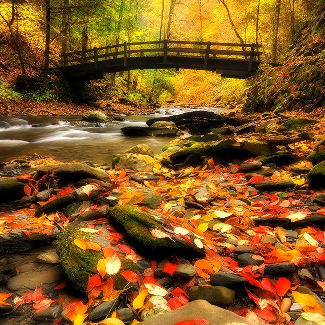 Wooden Bridge and Creek in Fall
