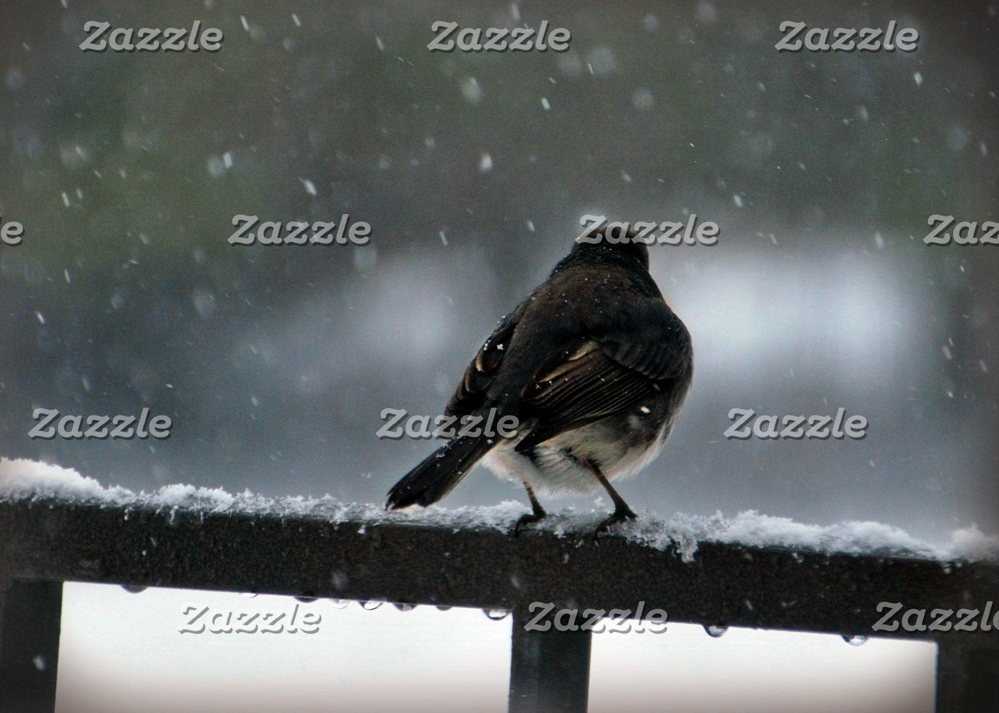 Birds N-Z