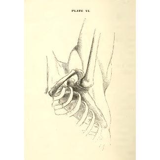 Vintage Anatomy | Shoulder Joint