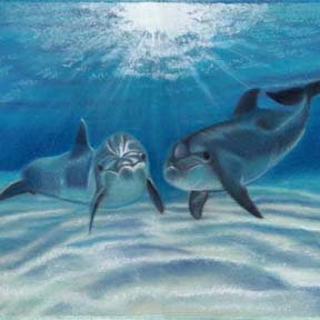 Dolphin Art and Gifts