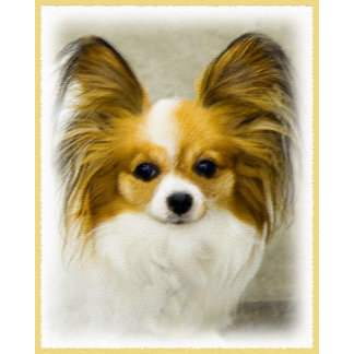 Papillon (Hound Tri-Color)