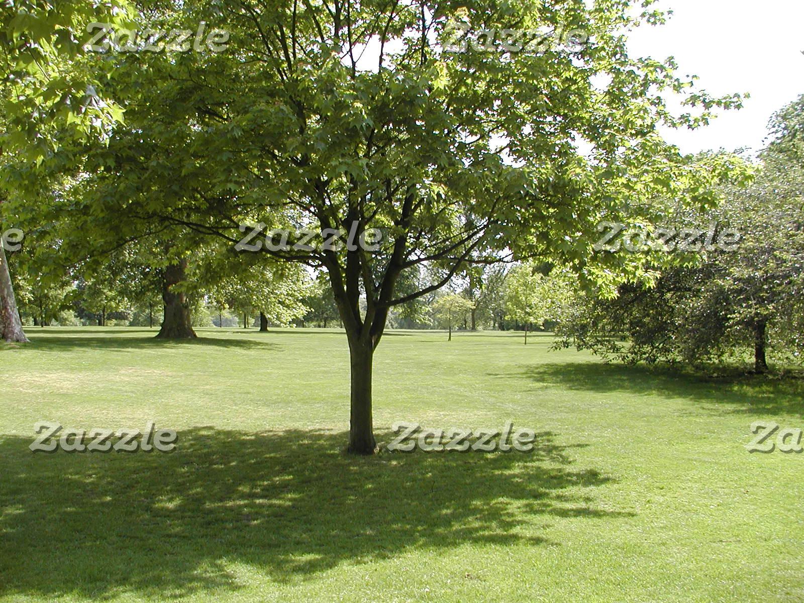 Plants and Landscape