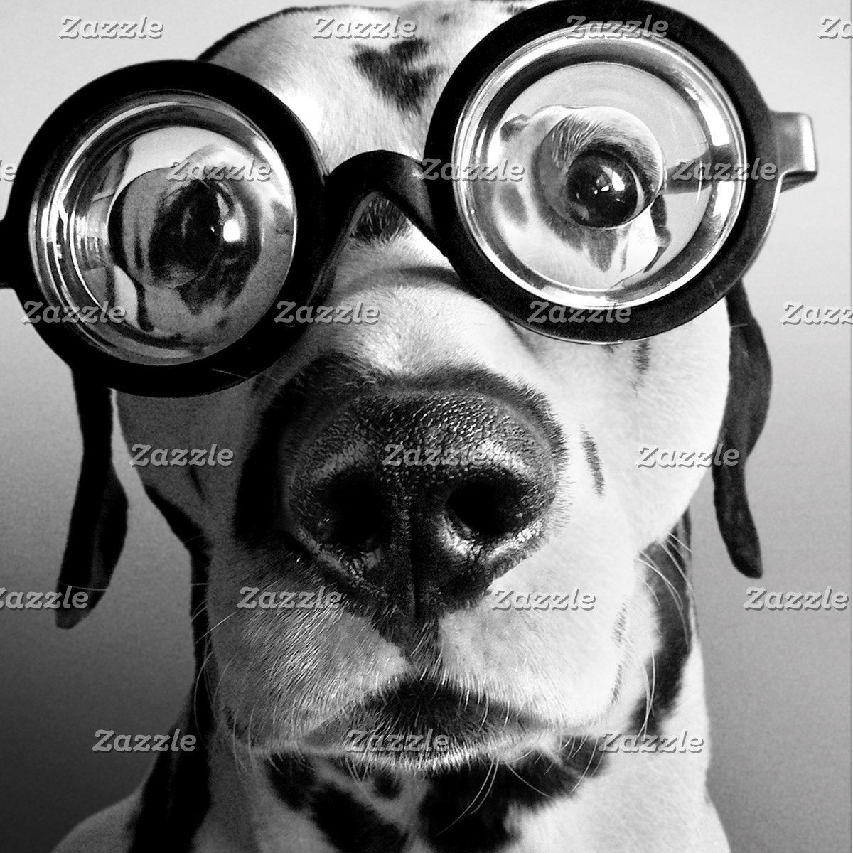 Funny Dalmatian Dog Wears Thick Glasses