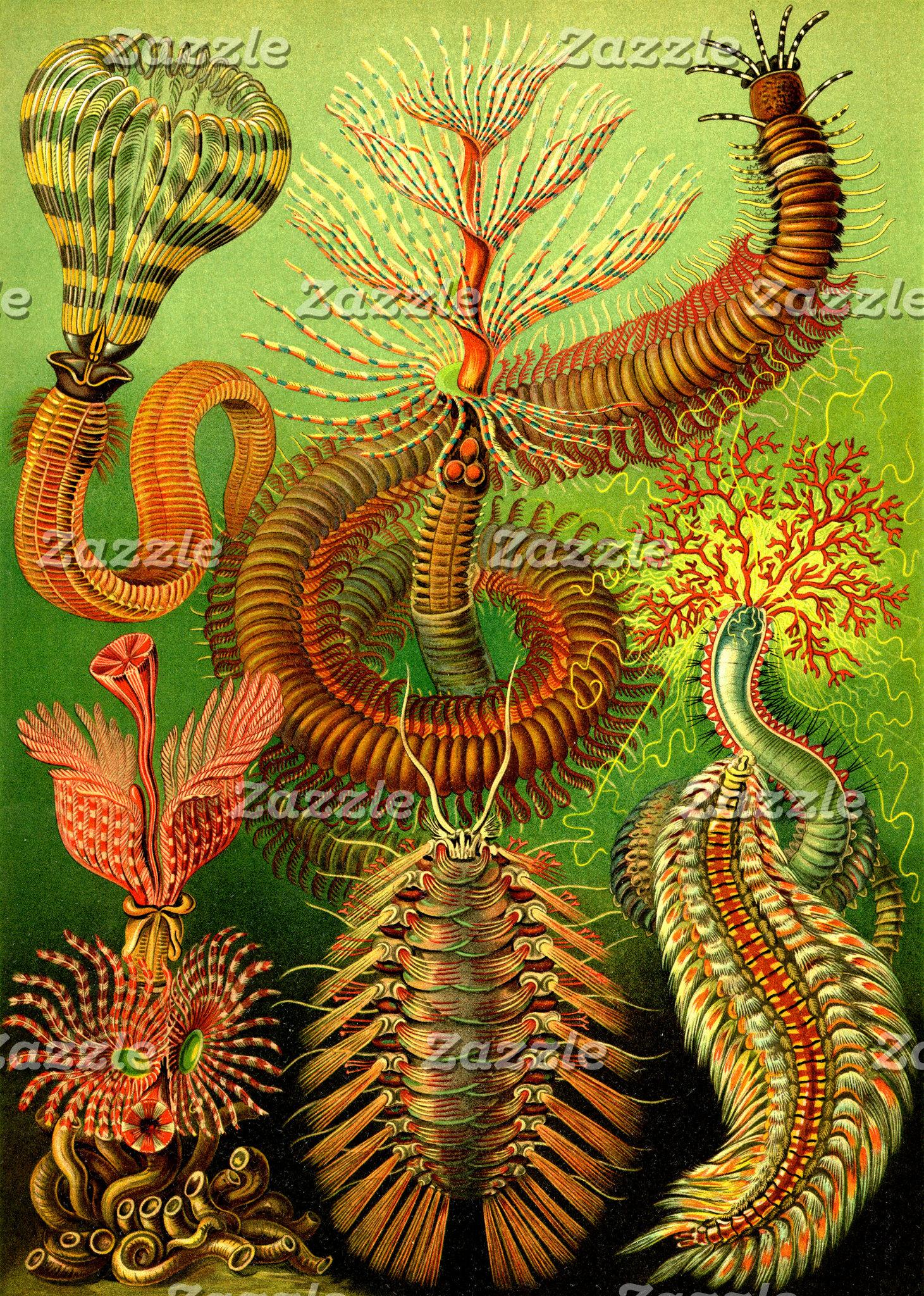 Ernst Haeckel Chaetopoda