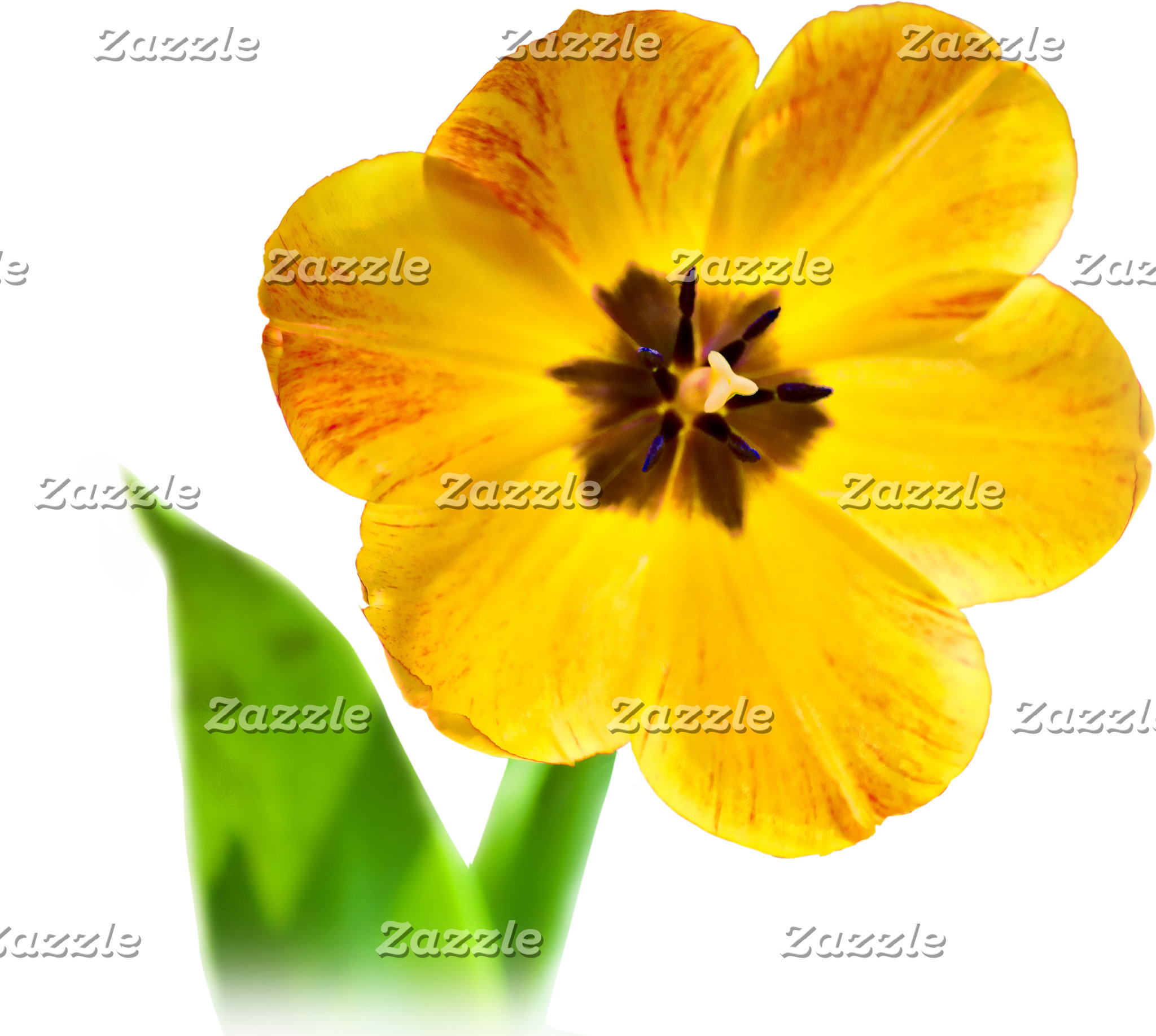 FLORAL PHOTOGRAPHY
