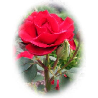 Red Rose Designs