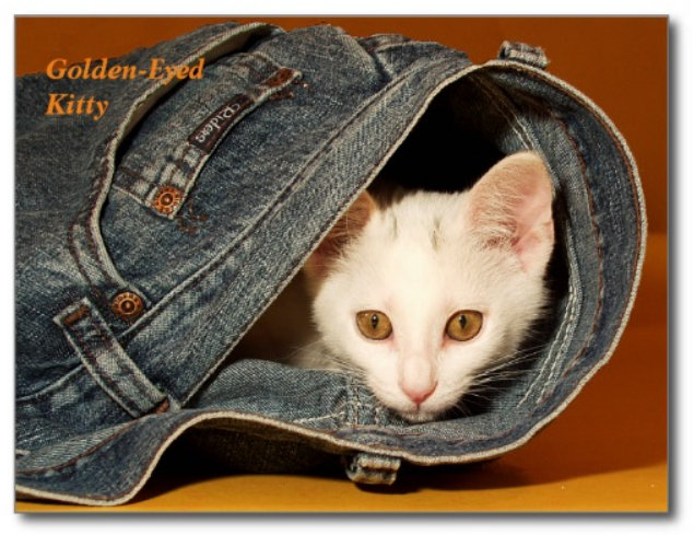 Cat Post Cards