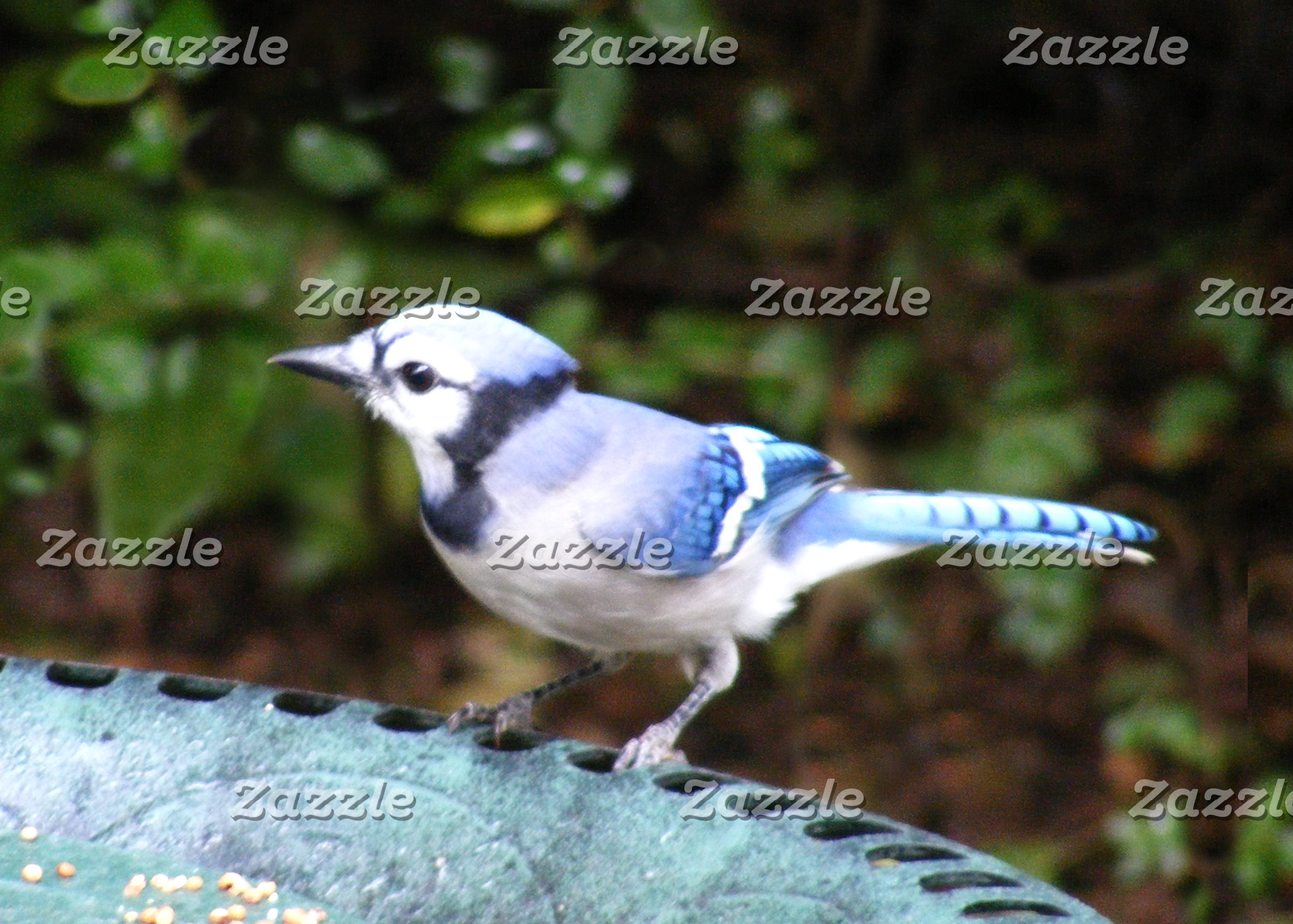 Blue Jay on Bowl