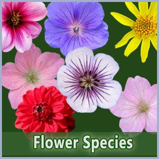 Flower Species