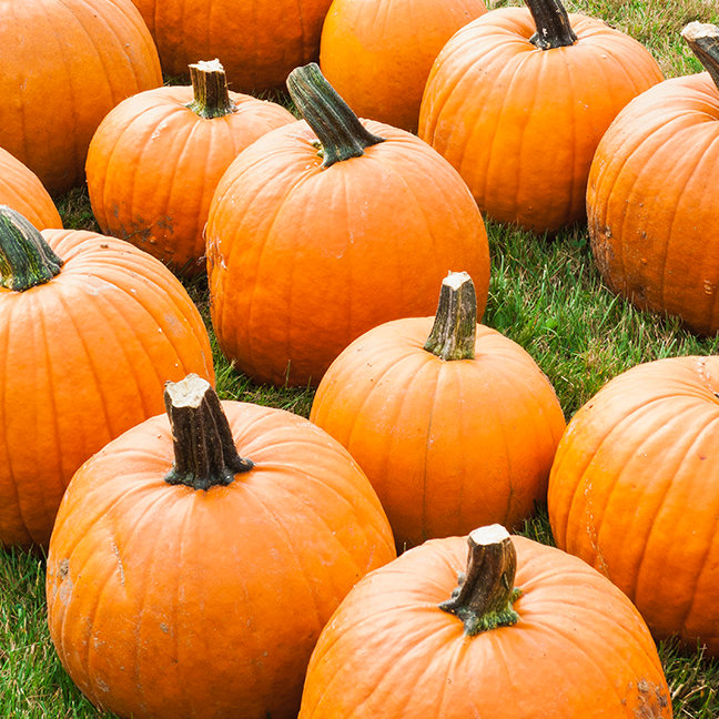 Pumpkins for Sale at a Farmer's Market