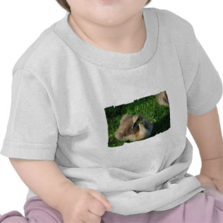 T-shirt canadense do bebê do ganso do bebê
