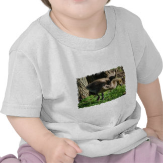 T-shirt do bebê de Gosling do canadense