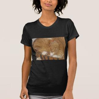 Taco o gato do Siesta Tshirts