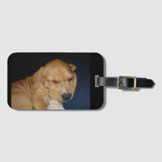 Tag da bagagem do filhote de cachorro do sono etiqueta de mala