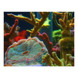 tanque coral do aquário da imagem da água salgada