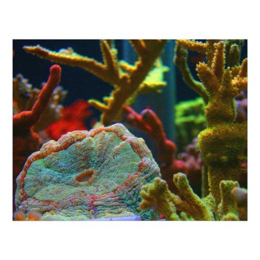 tanque coral do aquário da imagem da água salgada  modelo de panfletos