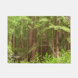 Tapete Árvores da sequóia vermelha no monumento nacional