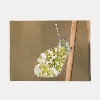 Tapete borboleta da Alaranjado-ponta