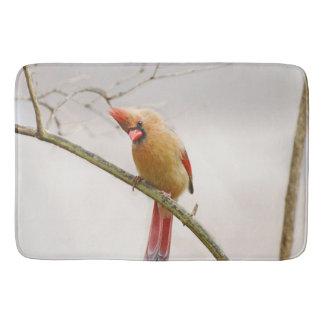 Tapete de banho cardinal fêmea curioso