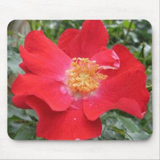 Tapete do rato Rosa vermelha Mousepads