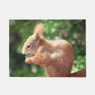 Tapete Esquilo