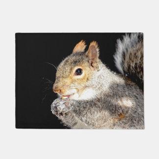 Tapete Esquilo que come uma porca