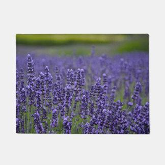 Tapete Flores lavendar roxas bonito