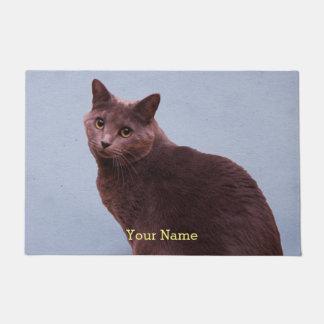 Tapete Olhar fixamente do gato azul do russo