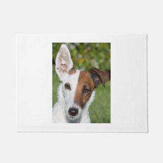 Tapete raposa-Terrier liso
