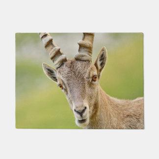 Tapete Retrato de um íbex