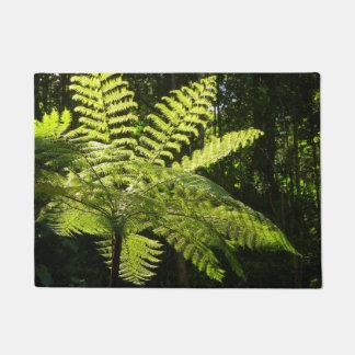 Tapete Samambaia de árvore na floresta húmida