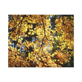 Tarde do outono