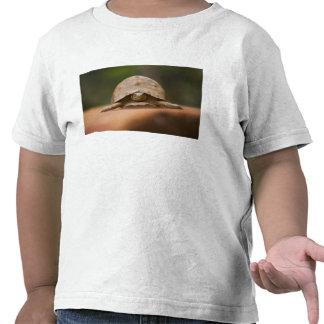Tartaruga da estrela, reserva de Perinet, T-shirts