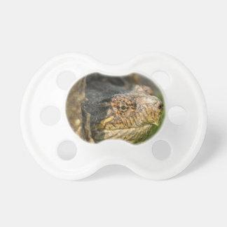 Tartaruga de agarramento chupeta