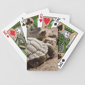 Tartaruga de deserto - sudoeste americano jogo de carta