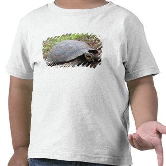 Tartaruga de Galápagos com a boca aberta T-shirt