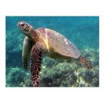 Tartaruga de Havaí da baía de Hanauma Cartões Postais