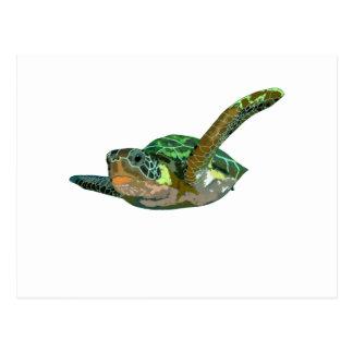 Tartaruga de mar de Costa Rica Cartao Postal