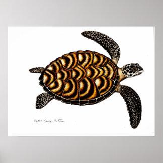 Tartaruga de mar de Hawksbill Impressão