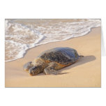 Tartaruga de mar havaiana cartao