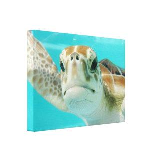 Tartaruga de mar no impressão envolvido canvas das