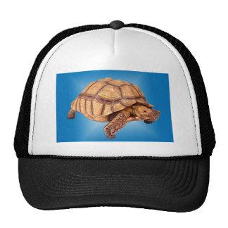 Tartaruga no azul boné